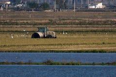 Agriculteur avec le tracteur dans le domaine de riz Photos libres de droits