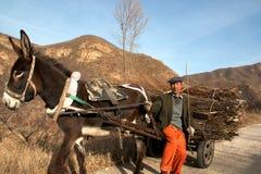 Agriculteur chinois sur un bois de chauffage de transport de chariot d'âne, province de Hebei, Chine photos libres de droits
