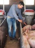 Agriculteur d'homme se tenant dans la porcherie Photo stock