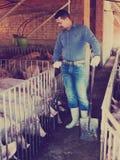 Agriculteur d'homme se tenant dans la porcherie Images libres de droits