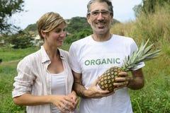 Agriculteur dans la plantation d'ananas Photographie stock libre de droits