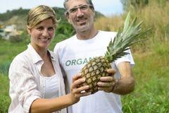 Agriculteur dans la plantation d'ananas Photo libre de droits