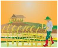 Agriculteur dans la rizière illustration de vecteur