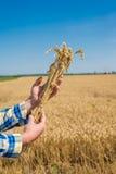 Agriculteur dans le domaine Photos stock