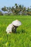 Agriculteur de Balinese travaillant au gisement de riz dans Bali Images stock