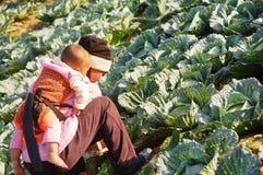 Agriculteur de femmes à l'idiot de baquet de Phu, Petchabun, Thaïlande Images stock