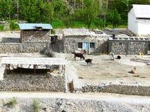 Agriculteur de Tadjik de yard Images libres de droits