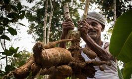 Agriculteur de tapioca dans l'Inde Photographie stock libre de droits
