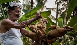 Agriculteur de tapioca dans l'Inde photo stock