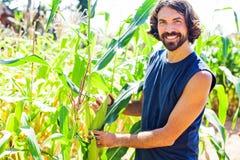 Agriculteur en ses années '30 sélectionnant le maïs sur un champ Photo libre de droits