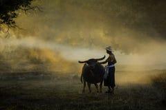 Agriculteur et son buffle le soir image stock