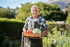 Agriculteur fier tenant la caisse végétale image libre de droits