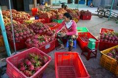 Agriculteur, fruit du dragon, dragonfruit, commerçant Image libre de droits