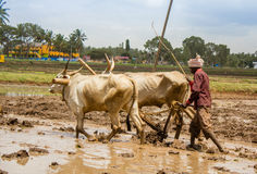 Agriculteur indien Photo stock