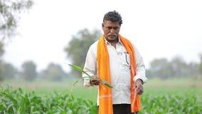 Agriculteur indien au champ de maïs vert banque de vidéos