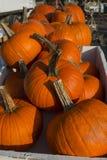 Agriculteur Market Pumpkins de Rochester Photographie stock libre de droits