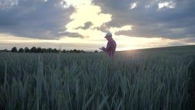 Agriculteur masculin moderne inspectant sa culture avec une tablette dans un domaine clips vidéos