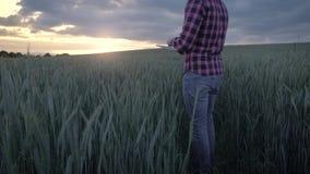Agriculteur masculin moderne inspectant sa culture avec une tablette dans un domaine banque de vidéos