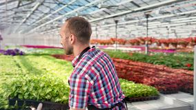 Agriculteur masculin sûr travaillant en serre chaude mettant la boîte avec le tir moyen de jeune plante de verdure clips vidéos