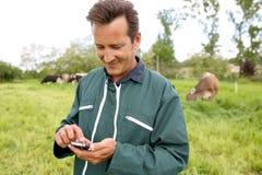 Agriculteur moderne dans le domaine avec des vaches utilisant le smartphone Photographie stock