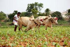 Agriculteur Plowing Photographie stock libre de droits