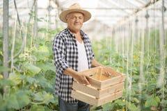 Agriculteur plus âgé tenant une caisse en bois vide en serre chaude Photos stock