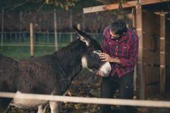 Agriculteur prenant soin d'âne extérieur Photo stock