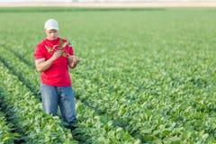 Agriculteur pulvérisant des usines de soja vert photos libres de droits