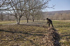 Agriculteur supérieur spring cleaning le verger Photos stock