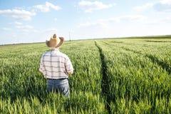 Agriculteur supérieur dans un domaine Photographie stock
