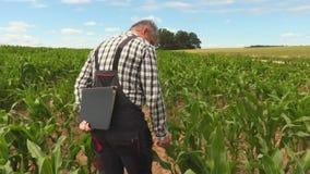 Agriculteur sur le champ de maïs banque de vidéos