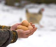 Agriculteur tenant les oeufs organiques Images libres de droits