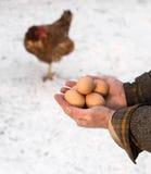 Agriculteur tenant les oeufs organiques Image libre de droits