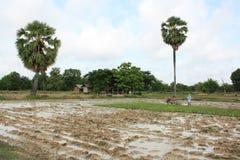 Agriculteur, Thaïlande Photographie stock libre de droits