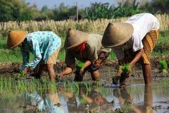 Agriculteur traditionnel image libre de droits