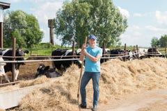 Agriculteur travaillant à la ferme avec des vaches laitières images libres de droits