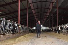 Agriculteur travaillant dans la ferme de vache photographie stock libre de droits