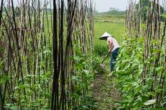 Agriculteur travaillant dans le domaine Images stock