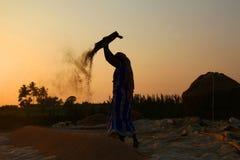 Agriculteur travaillant dans un domaine de riz dans le coucher du soleil Photos stock