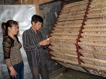 Agriculteur vietnamien pour vérifier l'oeuf dans l'incubateur images libres de droits
