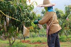 Agriculteurs Images libres de droits