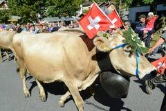 Agriculteurs avec un troupeau de vaches sur la transhumance annuelle chez Engelb Photo stock