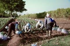 Agriculteurs chez Daxi, Taïwan Images libres de droits
