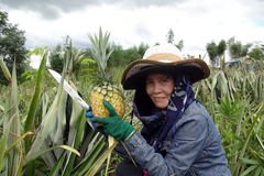 Agriculteurs d'ananas. Images stock