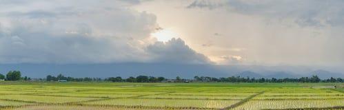 Agriculteurs d'usine de riz de panorama plantant le riz Images stock