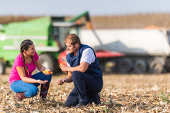 Agriculteurs dans des domaines de maïs pendant la récolte photos libres de droits