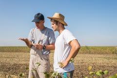 Agriculteurs dans des domaines de soja Photographie stock libre de droits
