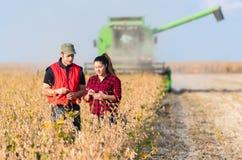 Agriculteurs dans des domaines de soja avant récolte Photos libres de droits