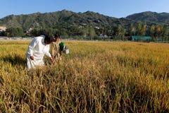 Agriculteurs dans des rizières Images libres de droits