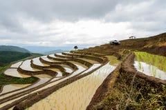 Agriculteurs dans la terrasse de riz Images stock